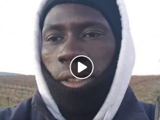 senegalese campagna