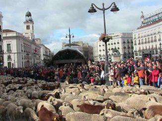 pecore madrid transumanza