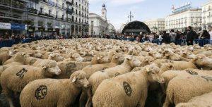 pecore madrid